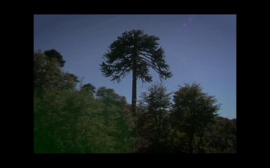 [Pewen]Araucaria film still05