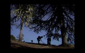 [Pewen]Araucaria film still08